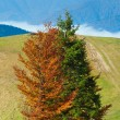 Stock Photo: Colorful trees on mountainside