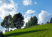 Trees on summer mountainside — Stock Photo