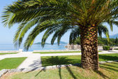 Summer park with palm trees (Montenegro) — Stock Photo