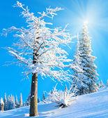 Snowy sunshine mountain landscape — Stock Photo