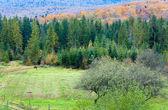 Autumn country landscape — Stock Photo