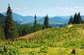 Summer mountain landscape — 图库照片