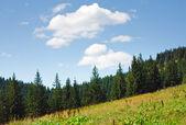 Summer mountain landscape — Stock Photo