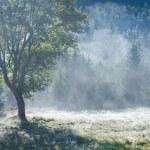 Morgen nebligen Herbst Berglandschaft — Stockfoto #12202400