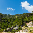 Summer Llogara pass (Albania) — Stock Photo #12203011