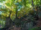 Autumn beech forest — Foto de Stock