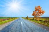 Autumn road and yellow birch — Stock Photo