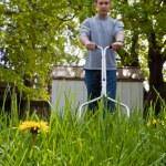 Dandelion flower mowed — Stock Photo