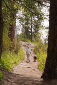 Spacery w lesie — Zdjęcie stockowe