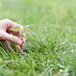 Hand holding a small tree over green — Stock Photo #11033308