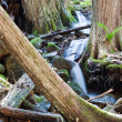 Tranquil stream in the forest — Stock Photo