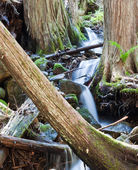 Tranquil stream in the forest — Stockfoto