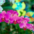 Orchids flowers . — Stock Photo