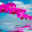 Stock Photo: Beautiful orchids .