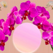 Beautiful orchids . — Stock Photo