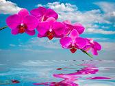 Beautiful orchids . — Stock Photo