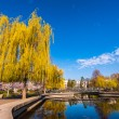 Weeping willow in the park on a lake — Stock Photo #10757663