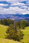 Una montañas de pinos mitad-seco en el fondo — Foto de Stock