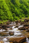 Mountain river flowing through the trees — Stock Photo