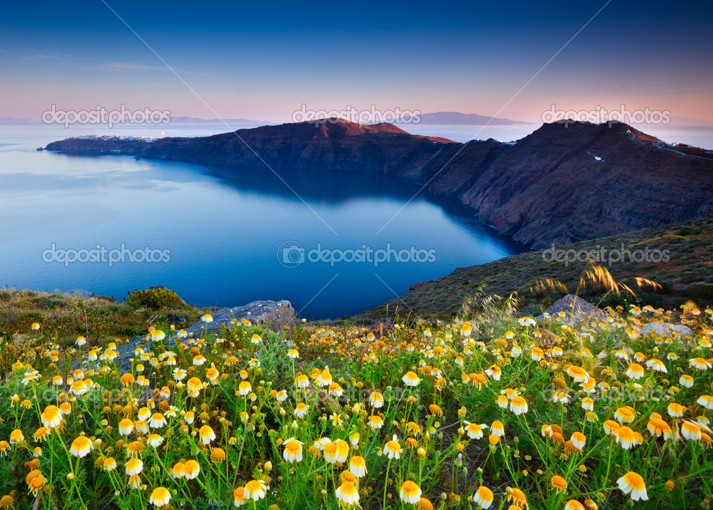 Beautiful flowers awaken in the morning on Santorini — Stock Photo #10875003