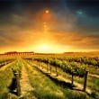 Royalty-Free Stock Photo: Stunning Vineyard Sunset