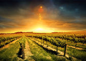 Impresionante puesta de sol viña — Foto de Stock