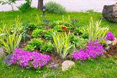 Small garden — Stock Photo