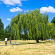 Seniors riding bicycles by willow tree big in the park — Stock Photo