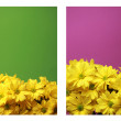 Botany background — Stock Photo
