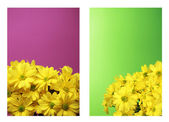 Floral banners — Stock Photo