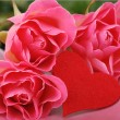 Romantic studio photo of three roses and a symbol of heart for holiday on Valentine Day theme - Foto de Stock