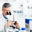 Senior male researcher carrying out scientific research in a lab - Stock Photo