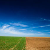 Seeded field and a field lying — Stock Photo