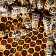 Stock Photo: Macro shot of bees swarming on a honeycomb