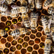 Royalty-Free Stock Photo: Macro shot of bees swarming on a honeycomb