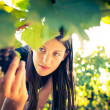 Grapes in a vineyard being checked by a female vintner — Stock Photo