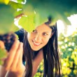 Grapes in a vineyard being checked by a female vintner — Stock Photo #11303024
