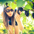 Grapes in vineyard being checked by female vintner — Stock Photo #11303098