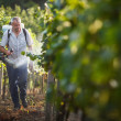 Vintner walking in his vineyard spraying chemicals on his vines — Stock Photo
