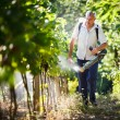 Royalty-Free Stock Photo: Vintner walking in his vineyard spraying chemicals on his vines