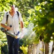 Vintner walking in his vineyard spraying chemicals on his vines — Stock Photo #11303142