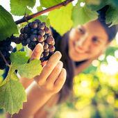 Druiven in een wijngaard wordt gecontroleerd door een vrouwelijke wijnboer — Stockfoto