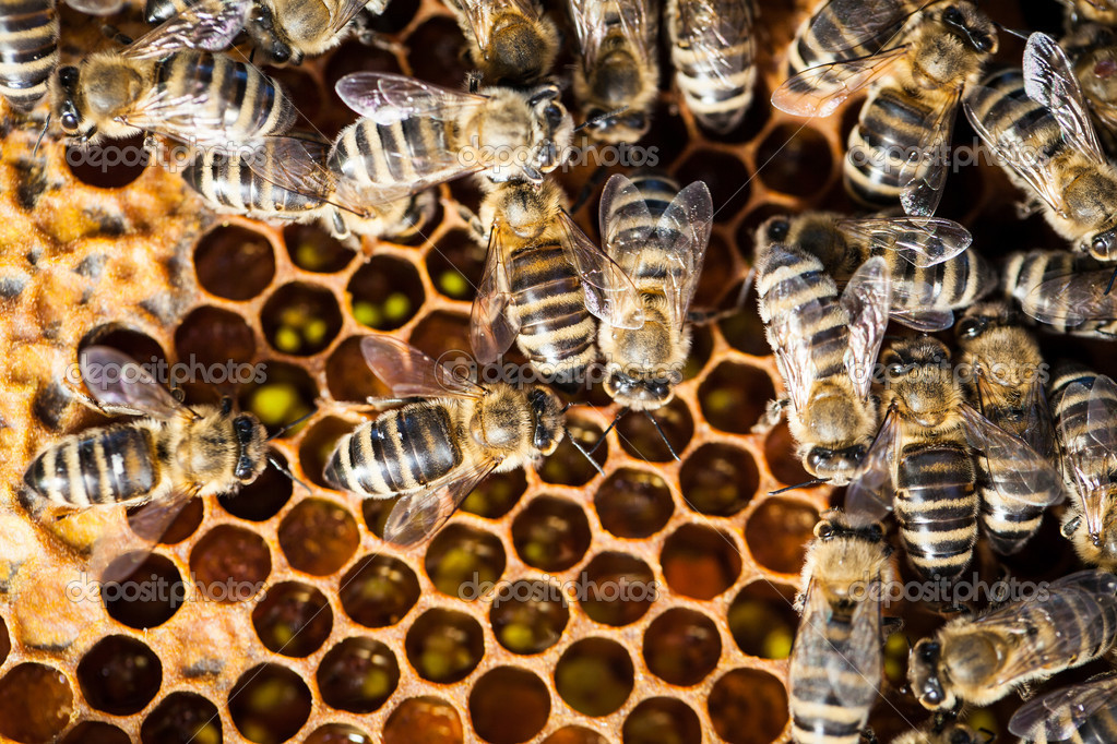 Macro shot of bees swarming on a honeycomb — Stock Photo #11302884