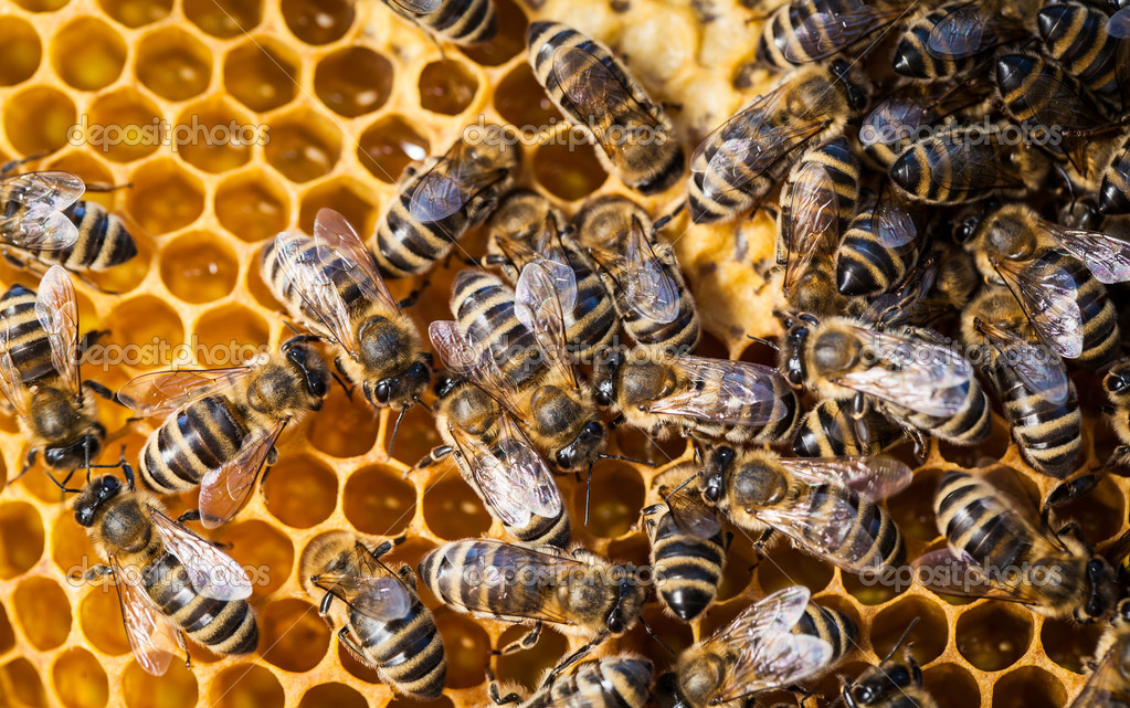 Macro shot of bees swarming on a honeycomb — Stock Photo #11302991