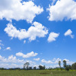 Hong Kong wetland with blue sky — Stock Photo #11521397