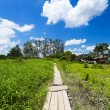Beautiful path along the meadows — Stock Photo