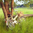 Bicycle on green meadow — Stock Photo
