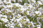 关于白花收集美味蜂蜜蜂 — 图库照片
