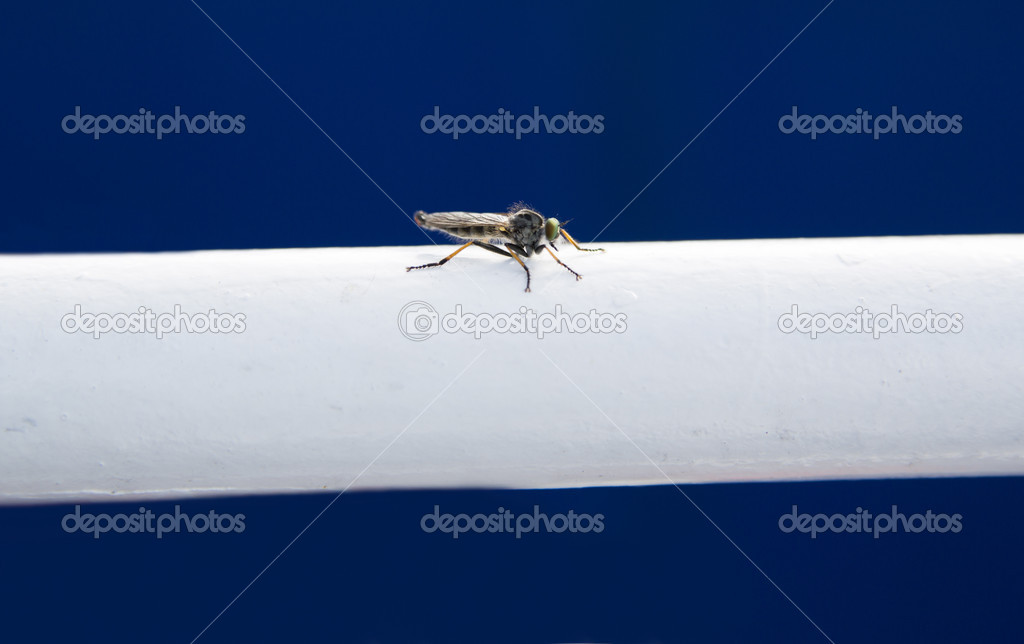 Small fly landed on white metallic ladder support  Stock Photo #11776812