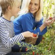 Young woman with teenager harvesting tomatoes — Stock Photo #11878943